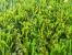 Best Artificial Grass – for Summer 2021