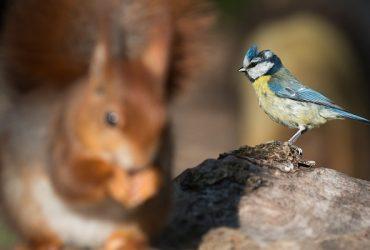 Best Squirrel Proof Bird Feeders That Work